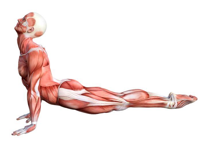 etirement-muscles-sport